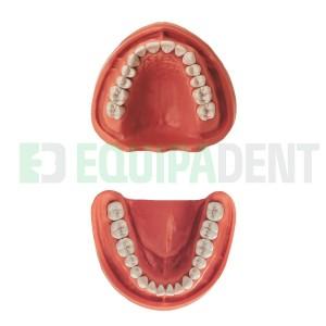 Modelo de dientes